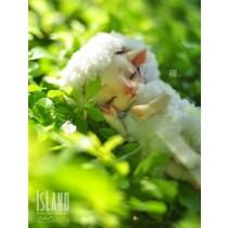 Mian Mian, 10.5cm Island Doll (Forest Island) Pet Doll