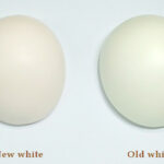 SoulDoll stopping 'old white' resin production